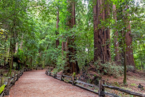 5-Henry-Cowell-Photo-Credit-Garrick-Ramirez1-e1436721211383
