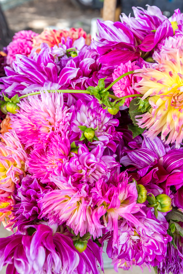 Farm Mkt Dahlias
