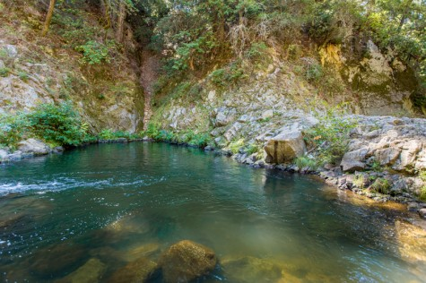 Garden Of Eden At Henry Cowell Redwoods State Park