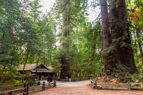 Henry-Cowell-State-Park-e1456902118222