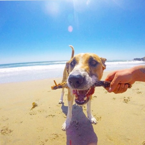 Getting Salty With The Pooch Your Guide To Dog Friendly Beaches