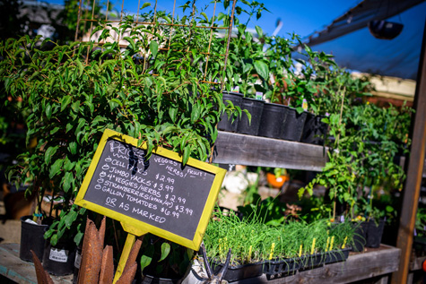 Mountain-Feed-and-Farm-Supply_Ben-Lomond_Commercial-Photography_Plants-1-2