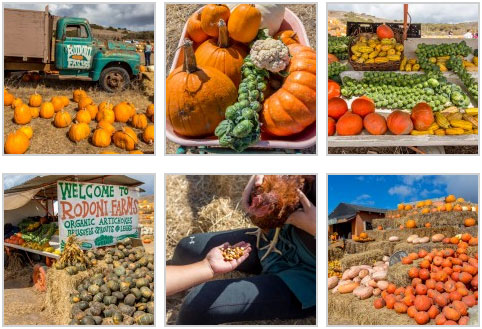 rodoni-farms-collage2