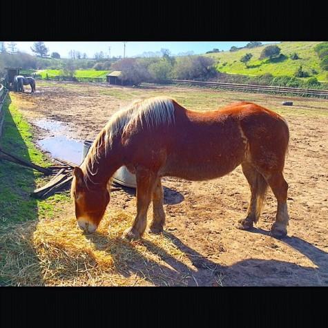 @seeninsantacruz - Horse