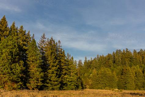 Henry Cowell Redwoods Photo Credit Garrick Ramirez