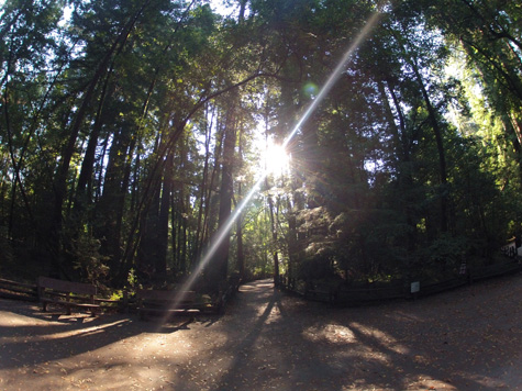 Henry Cowell Trail