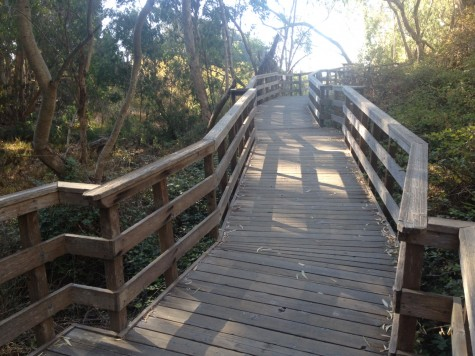 The path to the monarch observation deck in the eucalyptus grove is wheelchair and stroller-accessible.