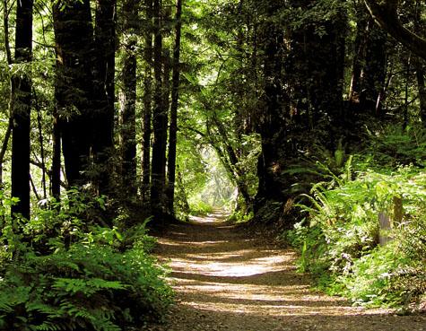 Nisene Marks Trail