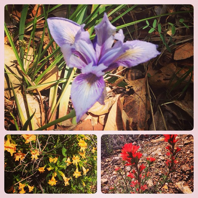 friends-3photo-wildflowers