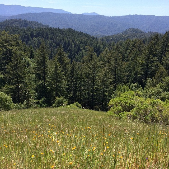 treehugger_1119_redwoods_field
