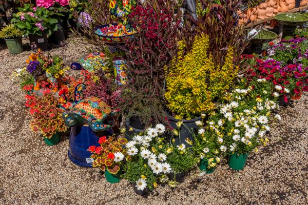 Garden Co Floral IQ
