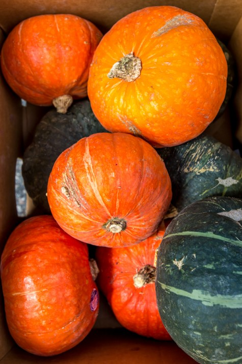 Farm Mkt Pumpkins