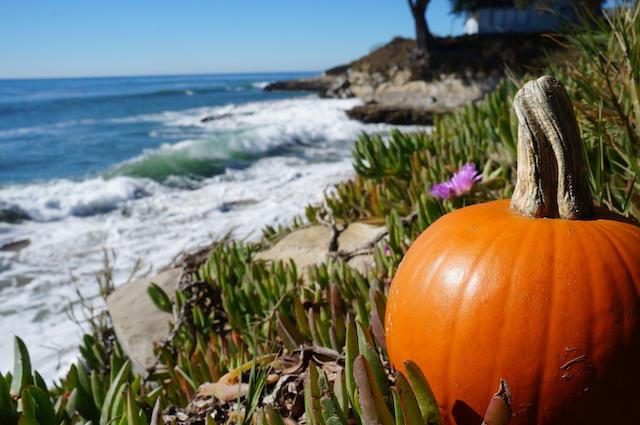 Santa Cruz Halloween Events 2020 Get Spooked with these Halloween Events in Santa Cruz County