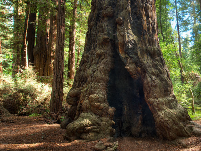 henry-cowell