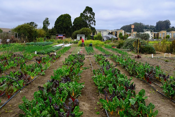 From Organic Farm To Compostable Fork Best Eco Friendly Eateries In Santa Cruz County Visit Santa Cruz County