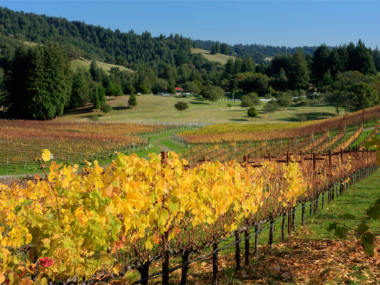 Corralitos Wine Trail Vines