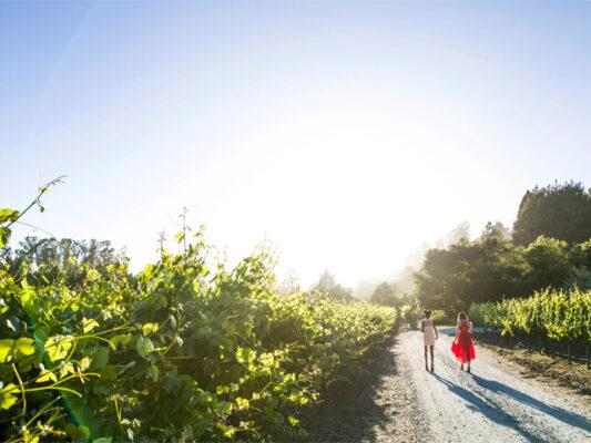 Nicholson Vineyards Friends Strolling Through the Vineyard