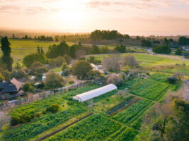 Ariel view of the UCSC Farm